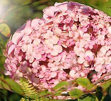 Light on Lilac:: by Cherubtree