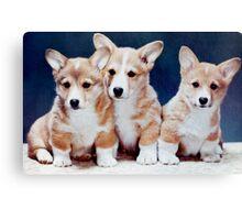 3 Corgi Puppies. Canvas Print