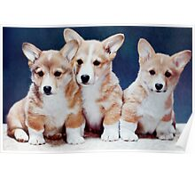 3 Corgi Puppies. Poster