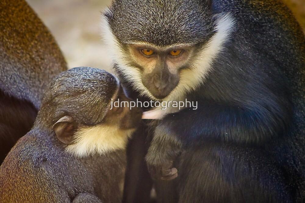 L'Hoest's Monkey  by jdmphotography
