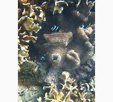 karimunjawa archipelago coral Unisex T-Shirt