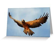 Swainson's Hawk - Soaring Greeting Card