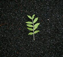 o dead leaf by Ganja