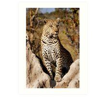 King of the Castle - Okavango Delta, Botswana Art Print