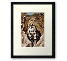 King of the Castle - Okavango Delta, Botswana Framed Print