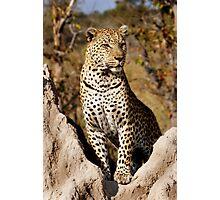 King of the Castle - Okavango Delta, Botswana Photographic Print