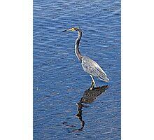 Crane/Heron???  Photographic Print