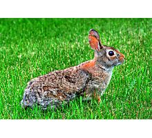 """Ready for the Bunny Hop"" Photographic Print"