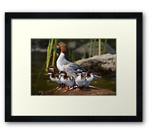 Merganser Family Framed Print