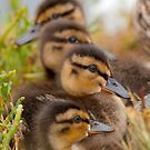 Ducks in a Row by Leroy Laverman