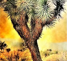 Joshua Tree  by LudaNayvelt