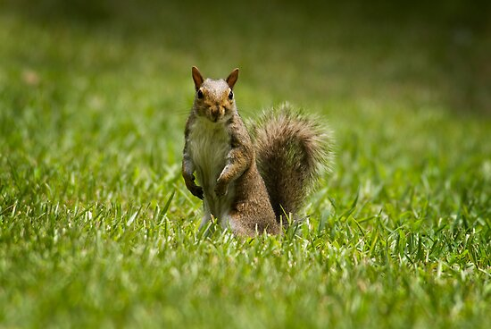 Just a Squirrel by Jim Haley