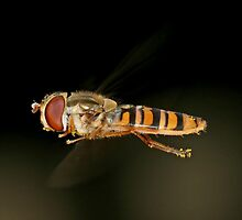 Hoverfly (crop) by Ian Chapman