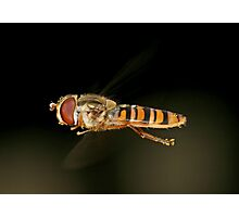 Hoverfly (crop) Photographic Print