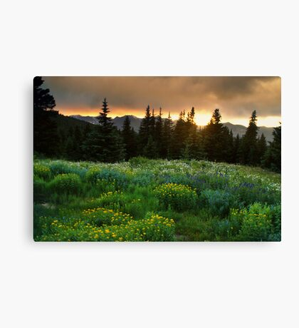 A Wildflower Sunset Canvas Print