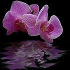 Orchid reflections by Luís Lajas