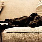 Sleeping dog by chwells