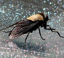 Western Black Horse Fly by Chuck Gardner