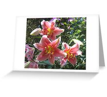 Acapulco Lily Showcase Greeting Card