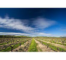 Winter Vines Photographic Print