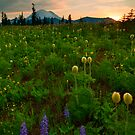 Rainier Wildflower Light by DawsonImages