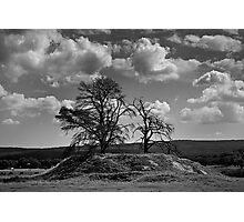 Trees on a Hill Photographic Print