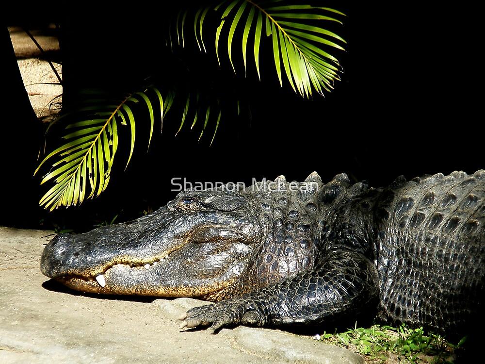 Happy Croc by shanmclean