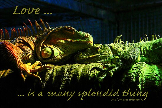 Love is a many splendid thing ... by Rosalie Dale