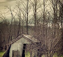 Forgotten Shed by Damian Harding