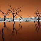 Burnt Orange  by Pene Stevens