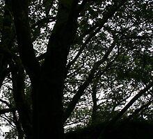 treeth by Ganja