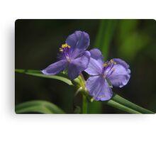 North American wildflowers Canvas Print
