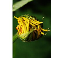 Like snap-beans (from wild flowers collection) Photographic Print