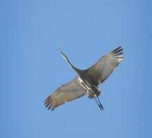 Raising the crane! by miradorpictures