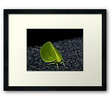 Leaf or Insect ? Framed Print