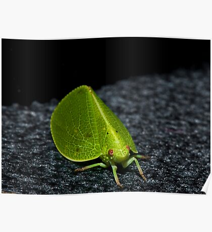 Leaf or Insect ? Poster