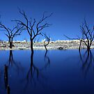 Blue Lagoon by Pene Stevens