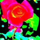 Sydney Rose by christazuber