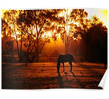 Feeding at Sunset Poster