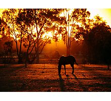 Feeding at Sunset Photographic Print