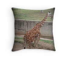Giraffe/Abilene Zoo Throw Pillow