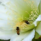 Bee pair by Bonnie Pelton