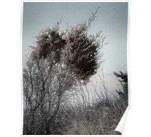 Winter Cedar Poster