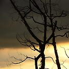 Tree by Digby