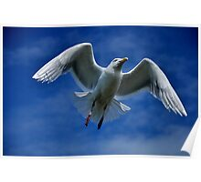 Feathers  & Flying Poster