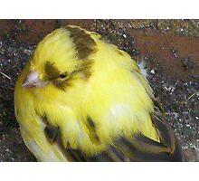 what Bird am I please Photographic Print