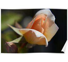 Micro Rose Poster