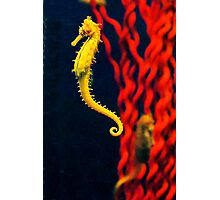 Seahorse Side View Photographic Print