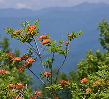 Flame Azalea III by Gary L   Suddath