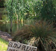 Duck Sign by Lynn Ede